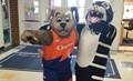 dog and tiger mascot