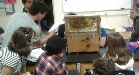 Student studying bee hive